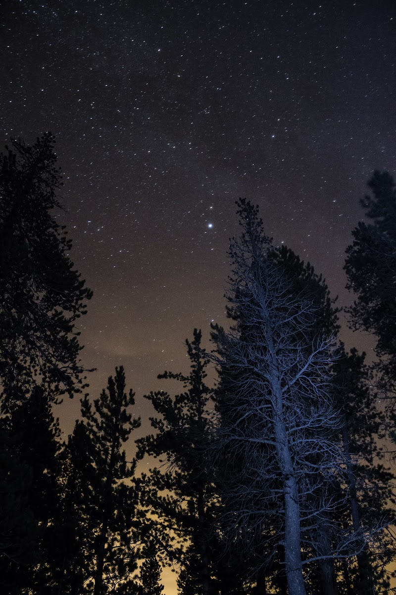 a tree illuminated under a starry sky