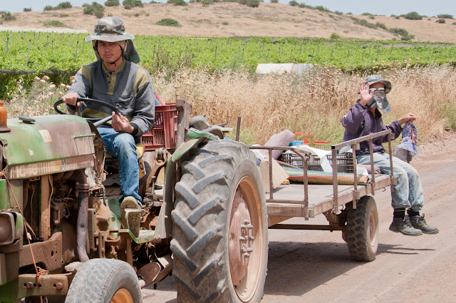 thai agricultural workers in Israel