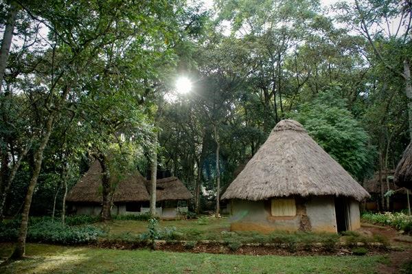 Colors Of Kenya Bara Chinitas Green Kenya