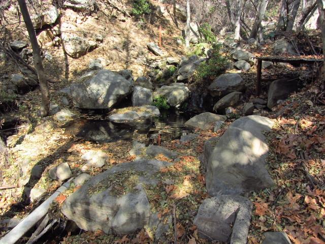 dammed up creek