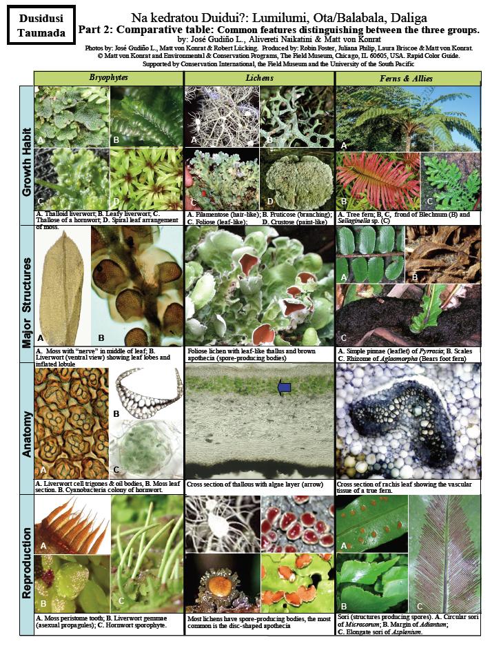 What Are Bryophytes Cape Horn Bryophytes