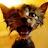 Linas Adamonis avatar image