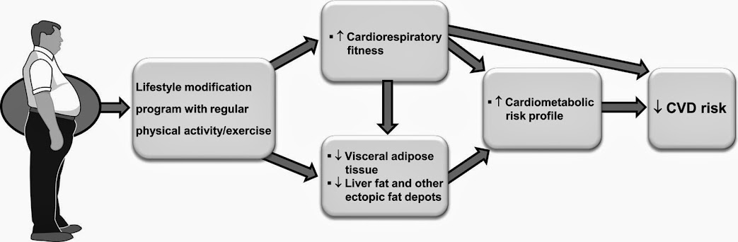 visceral fat treatment