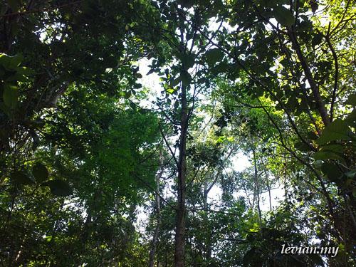 Forest (SE Vivaz)