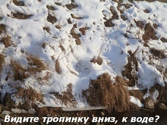фотозагадка зимняя