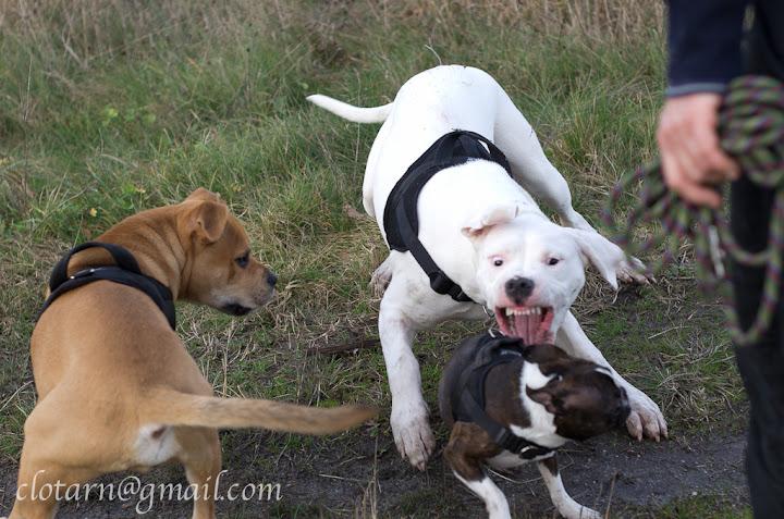 Rencontre canine du forum en région bordelaise (33) - Page 2 Balade33-0586
