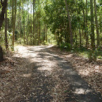 Trail through forest in Blackbutt Reserve (401488)