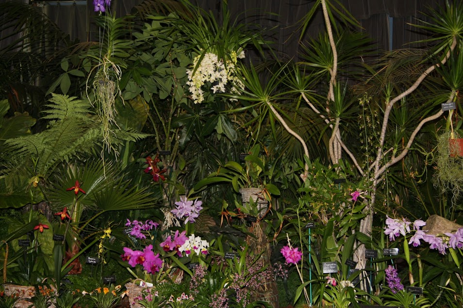 Exposition Orchidées en pays corsaire (St Malo - 35) - 1/2/3 Novembre 2013 IMG_3409+%2528Large%2529