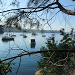 Boats on Sydney Harbour (258935)
