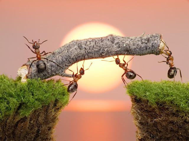 """lời răn từ loài kiến :""""Đừng bao giờ bỏ cuộc, hãy luôn tìm một đường khác nếu đường cũ bị tắc"""""""