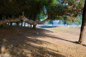 Trees near the railways guest house, Bank of Chanab river, Multan.
