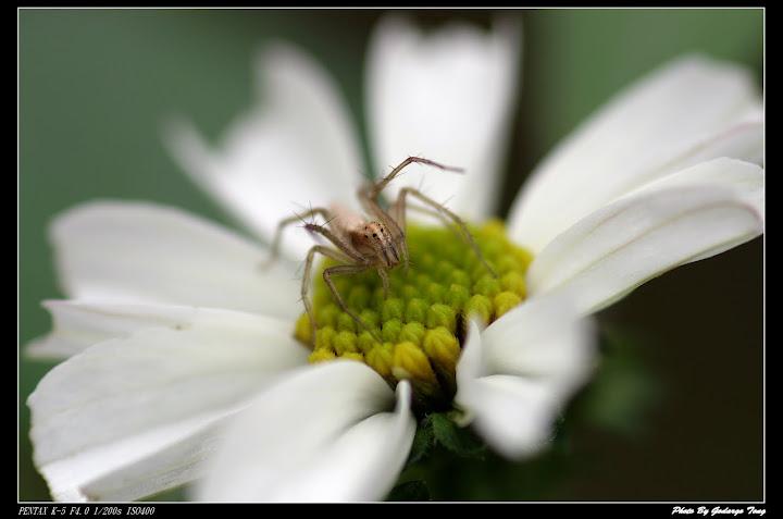 紅標百微下的小蜘蛛