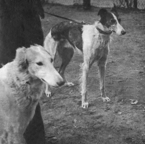 Ретро фото собак.  %25D0%2591%25D0%25B5%25D0%25B7%2520%25D0%25B8%25D0%25BC%25D0%25B5%25D0%25BD%25D0%25B8-16%25D0%25BF%25D0%25BC