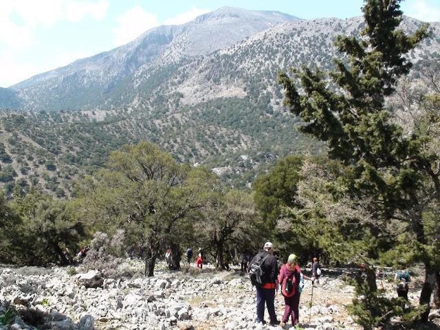 39η Παγκρήτια Ορειβατική Συνάντηση (Δάσος Ρούβα)