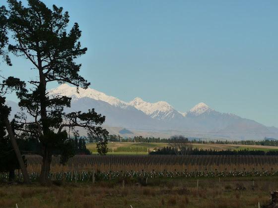 El paisaje en Blenheim si que es impresionante