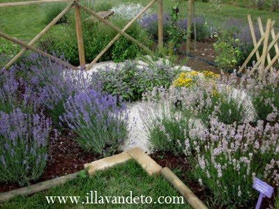 Il lavandeto di assisi vivaio e giardino della lavanda for Addobbi per giardino