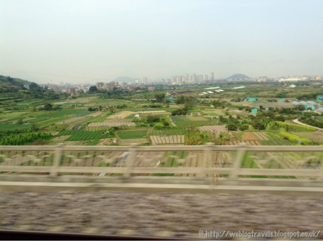 China train view of paddy fields