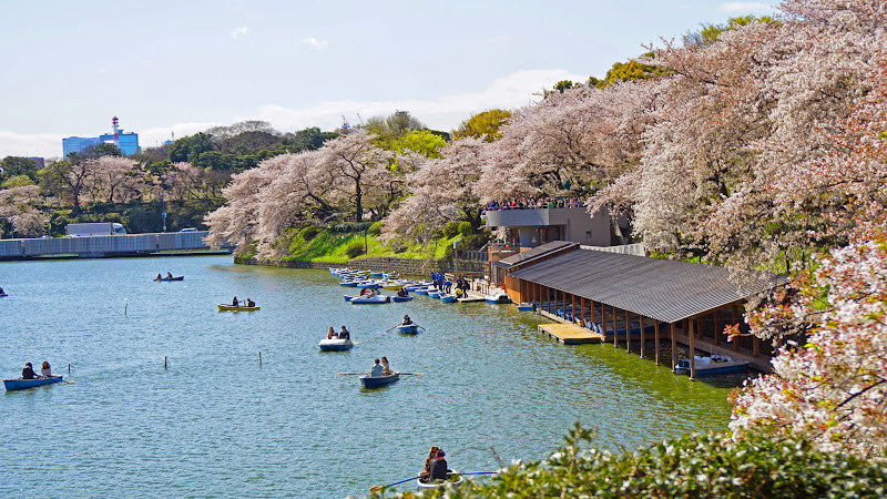 千鳥ヶ淵 桜 写真11