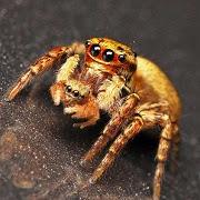 Приснился золотой паук