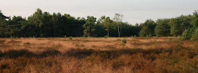 Marche Kennedy (80km) de Someren (NL): 7-8 juillet 2012 IMG_5458