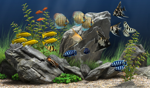Digital aquarium screensaver 1 4 7 watch the beauty of the underwater world