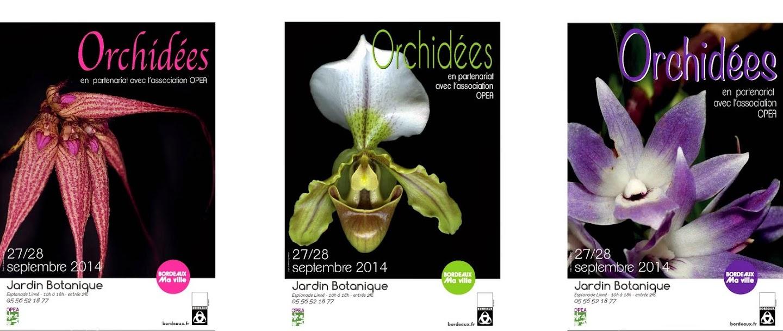 orchid%25C3%25A9es%2520A3.jpg