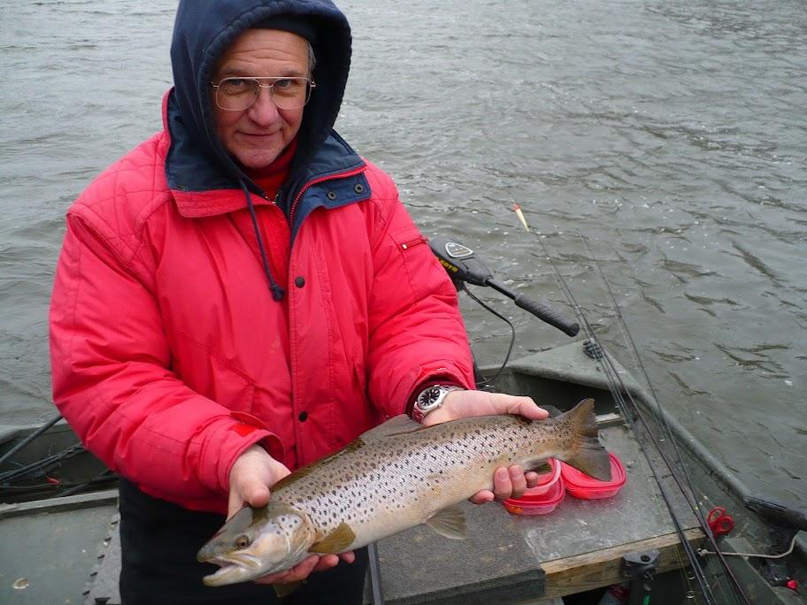 Grand River Lake Run Brown Trout Fishing
