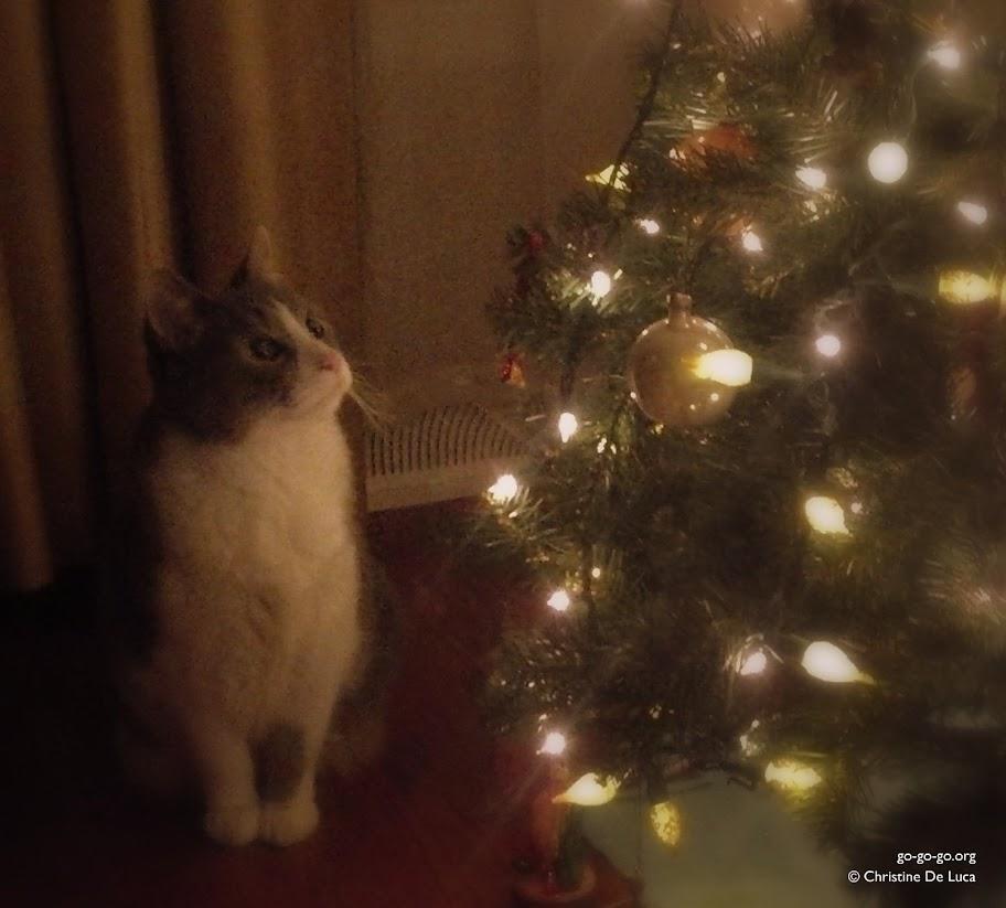 Everyday Photo: Meowry Christmas