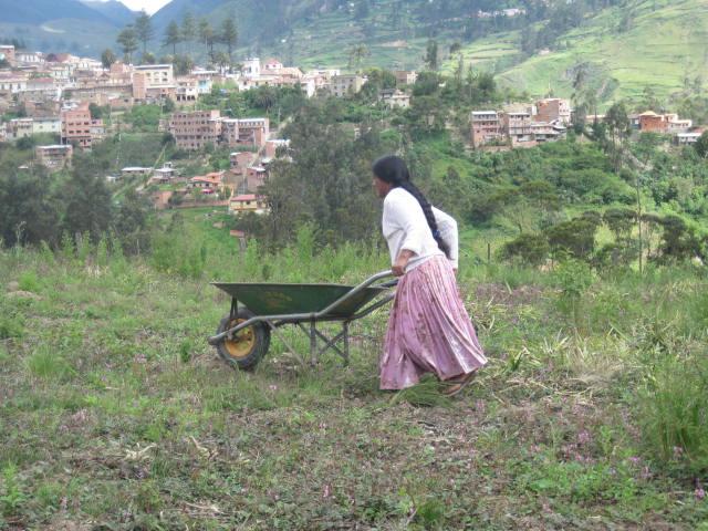 Cholitas de Sorata