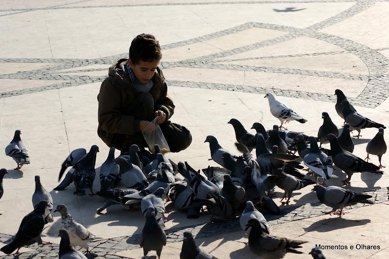Criança alimenta os pombos em Setúbal
