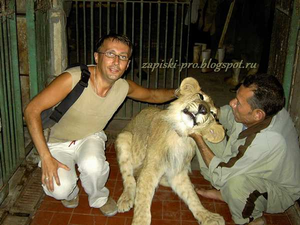 Животные в зоопарке Каира