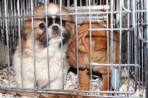 Animali, al via la campagna di Legambiente contro i maltrattamenti