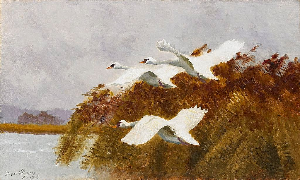 Bruno Liljefors - Streching swans 1915