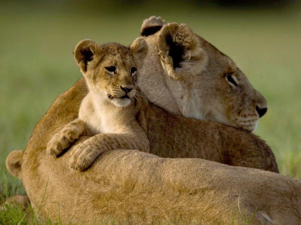 Nice Pictures of Baby Animals and Their Mothers 12