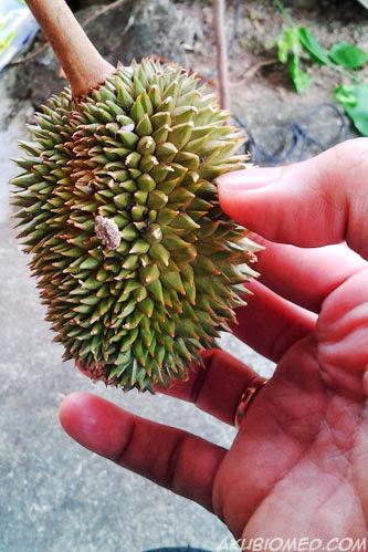 putik durian