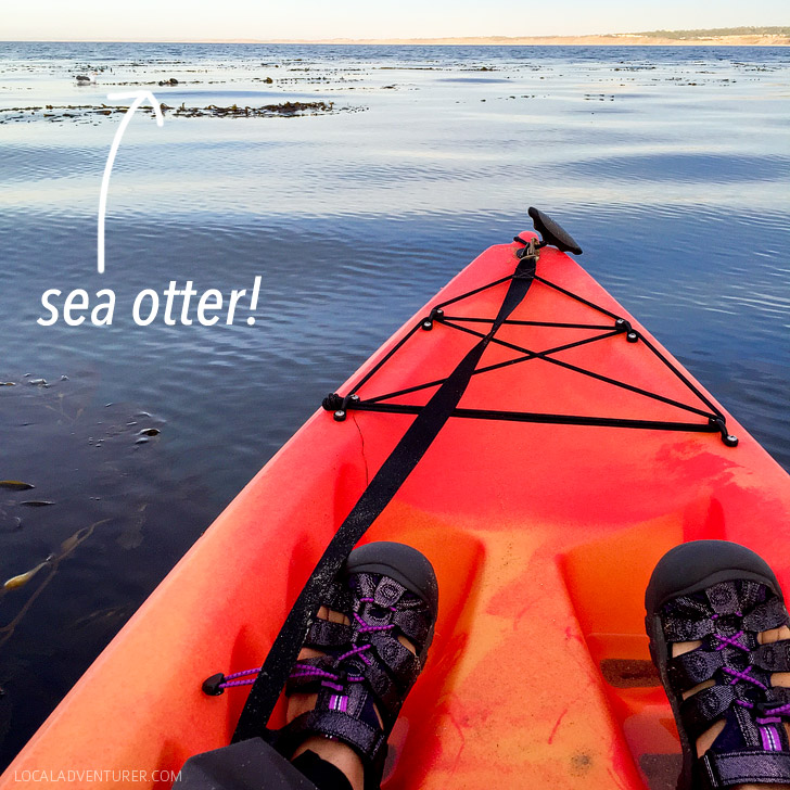 Adventures by the Sea Monterey Bay Kayaks.