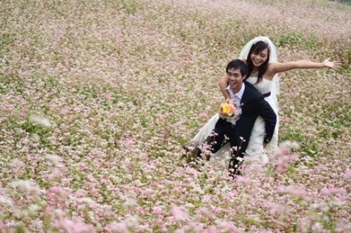 hoatamgiacmach4 002 Mùa hoa tam giác mạch lại về trên núi đá hà Giang