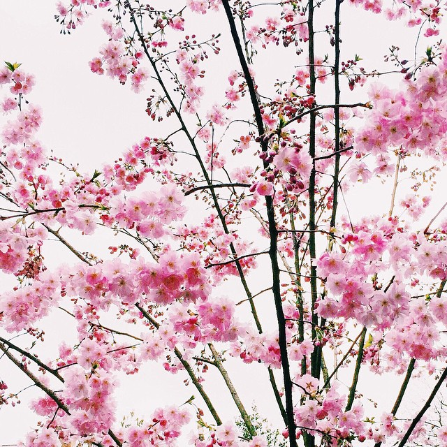 INSPIRATION: Spring Blooms