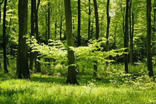 La Naturaleza Es El Templo De Los Dioses