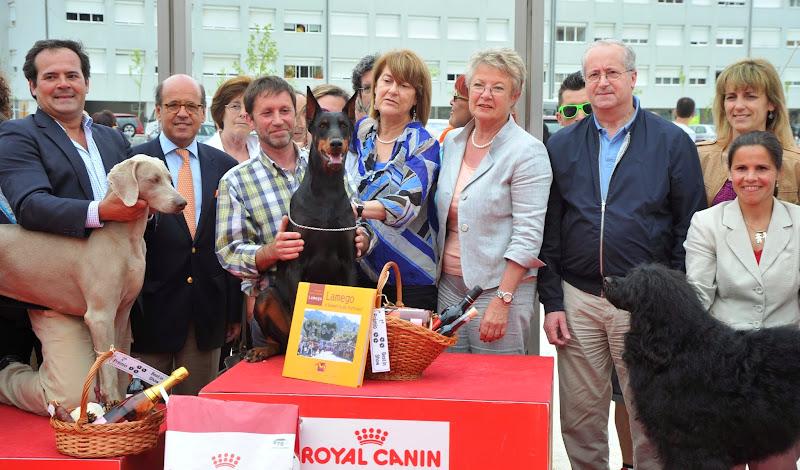 Dobermann vence Exposição Canina Nacional de Lamego