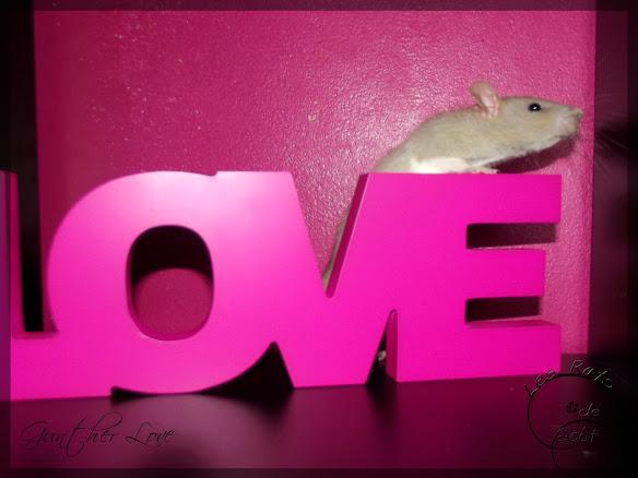 Gunther love