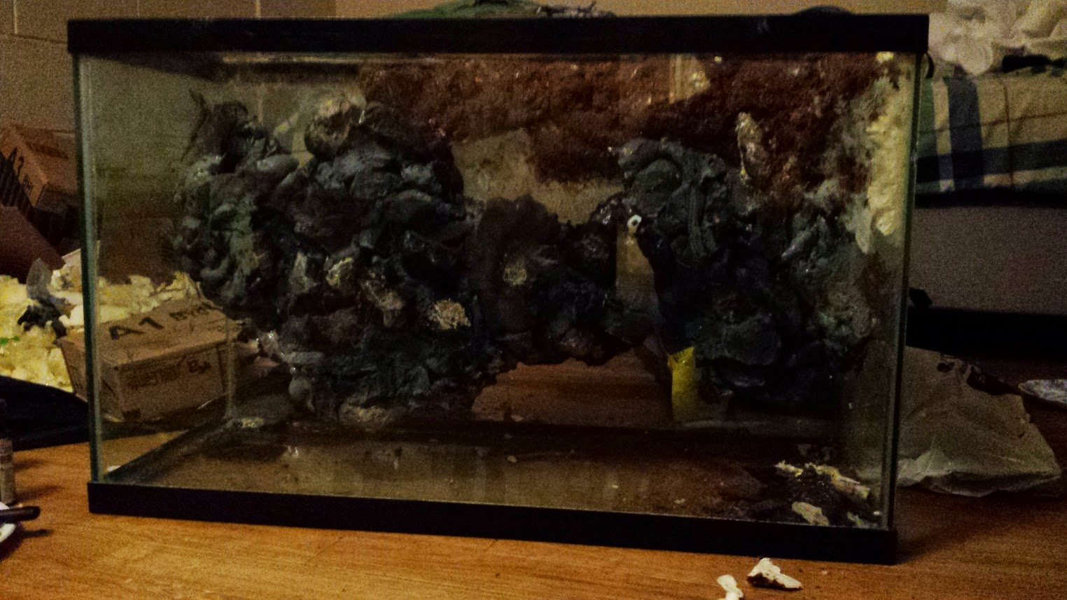 how to build a paludarium with a stream