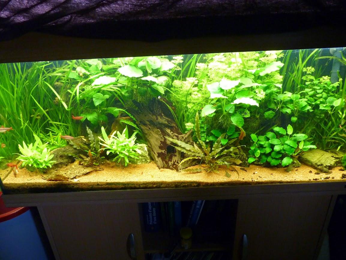 Ma petit histoire Aquariophile de 2009 à aujourd'hui  P1060138