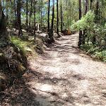 Sid Pulsford Walking trail (236180)