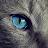 Putu Jody avatar image