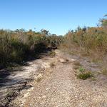 Dense low heath vegetation along the Salvation Loop track (156256)