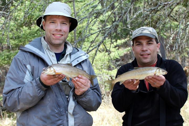 round whitefish double