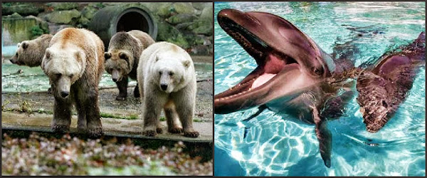 Image of Grolar Bears and Wholphins