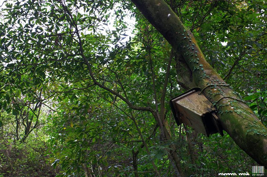 樹上不時有飼鳥的木箱