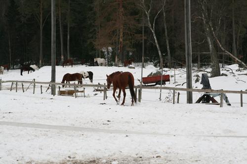 fina hästar